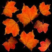 fall-331485_640